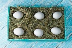 De eieren van de kip Stock Fotografie