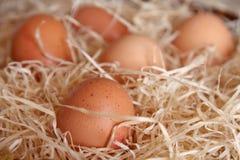 De eieren van de kip Stock Afbeelding