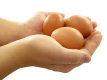 De eieren van de kip in de handen Stock Afbeeldingen