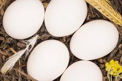 De eieren van de kip in een nest Stock Afbeeldingen