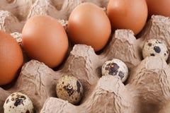 De eieren van de kip en van kwartels Royalty-vrije Stock Afbeeldingen