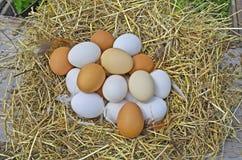 De eieren van de kip in het stro Stock Afbeeldingen