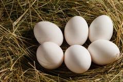 De eieren van de kip in het stro Houten rustieke achtergrond Stock Afbeeldingen