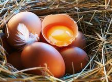 De eieren van de kip in het stro met de helft Royalty-vrije Stock Afbeeldingen