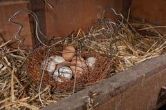 De eieren van de kip in mand Royalty-vrije Stock Afbeeldingen