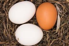 De eieren van de kip in nest Royalty-vrije Stock Fotografie