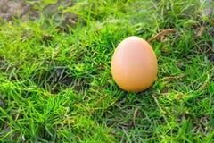De eieren van de kip op gras Stock Foto