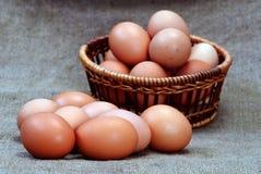 De eieren van de kip van bruine kleur in kartoncellen Stock Foto's