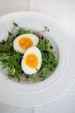 De eieren van de Ramenstijl en verse spruiten Stock Afbeeldingen