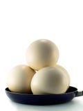 De eieren van de struisvogel Stock Fotografie