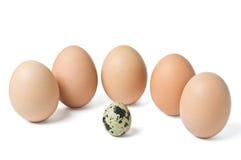 De eieren van Groupe Royalty-vrije Stock Afbeelding
