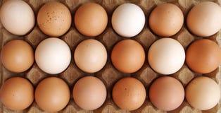 De eieren van het landbouwbedrijf - verscheidenheid van kleuren Stock Foto's