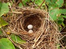 De Eieren van het nest Stock Afbeelding