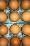 De eieren van de kip stock foto