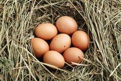 De eieren van de kip in het nest stock fotografie