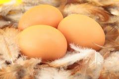 De eieren van kippen in nest Royalty-vrije Stock Afbeeldingen
