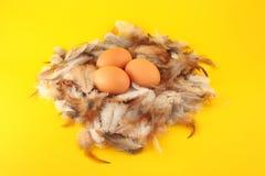 De eieren van kippen in nest Stock Afbeeldingen
