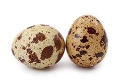De eieren van kwartels Stock Fotografie