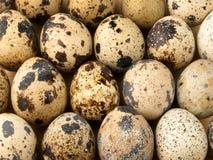 De eieren van kwartels. Stock Foto