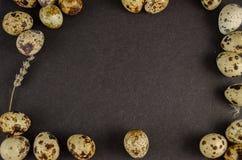 De eieren van kwartels Royalty-vrije Stock Afbeeldingen