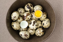 De eieren van kwartels Stock Foto's