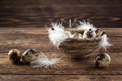 De eieren van kwartels in een nest royalty-vrije stock afbeeldingen