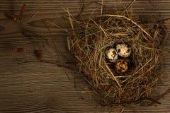De eieren van kwartels in een nest Stock Foto