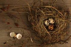 De eieren van kwartels in een nest Royalty-vrije Stock Foto's