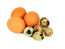 De eieren van kwartels en van kippen die op wit worden geïsoleerdi Stock Afbeelding