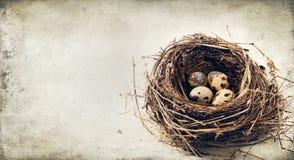 De eieren van kwartels in het nest Stock Afbeeldingen