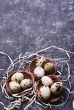 De eieren van kwartels in nest Stock Foto's