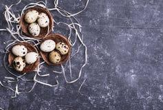 De eieren van kwartels in nest Royalty-vrije Stock Afbeelding