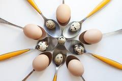 De eieren van kwartels op lepels Royalty-vrije Stock Fotografie