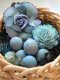 De eieren van Robins Royalty-vrije Stock Fotografie