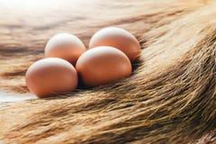 De eieren worden geplaatst op gras royalty-vrije stock fotografie