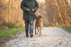 De eigenaar en de hond lopen door het bos royalty-vrije stock afbeelding