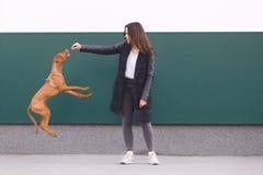 de eigenaar leidt de hond op meisje het spelen met een mooie jonge hond tegen de achtergrond van de muur stock afbeeldingen