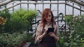 De eigenaar van ruime serre doet inventaris die en tellende installaties en tablet controleren gebruiken terwijl haar nieuwsgieri stock video