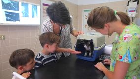 De eigenaars van de kat een vrouw en twee jongens verlokken de kat uit de kooi in dierenartskliniek stock footage