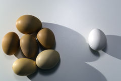 De eigengemaakte kippeneieren van bruine kleur zijn dicht bij elkaar en legt Één wit ei van de opslag in het ochtendlicht van de  stock fotografie
