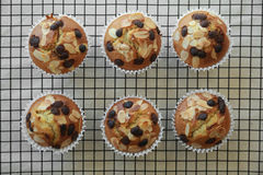 De eigengemaakte muffins van de de amandelplak van de abrikozenchocoladeschilfer Stock Fotografie