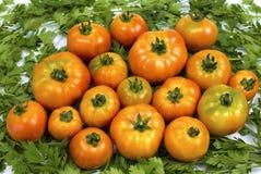 De eigengemaakte tomaten zijn op peterselie, rode tomaten op groene peterselie, voor een culinair boek stock afbeeldingen