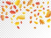De eik, esdoorn, wilde aslijsterbes verlaat vector, de herfstgebladerte op transparante achtergrond royalty-vrije stock foto