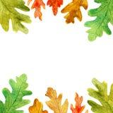 De eik van de de herfstwaterverf verlaat vierkant kader royalty-vrije illustratie