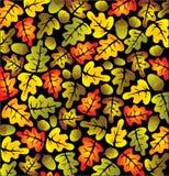 De eiken bladeren van de herfst Stock Foto's