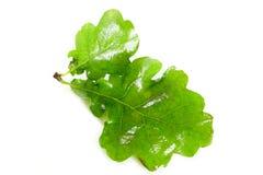 De eiken bladeren van de zonnestilstandmidzomer royalty-vrije stock foto's