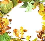 De eiken bladerenvlakte lag Royalty-vrije Stock Afbeelding