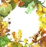 De eiken bladerenvlakte lag Royalty-vrije Stock Foto's