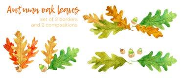 De eiken geplaatste bladeren en de eikels van de waterverfherfst stock illustratie