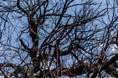 De eiken takken op de blauwe hemelachtergrond sluiten omhoog royalty-vrije stock fotografie